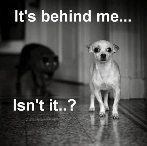 funny-dog-photo-with-caption-dog-stalked-by-cat