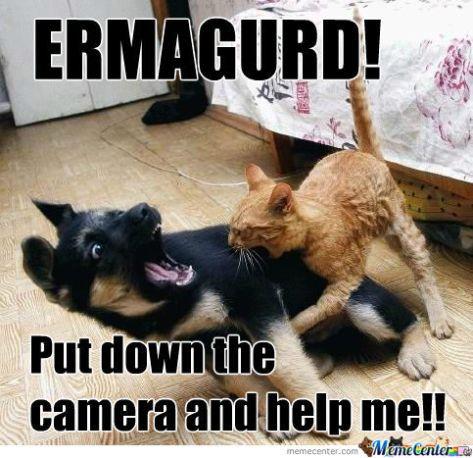 cats-vs-dogs_o_923627