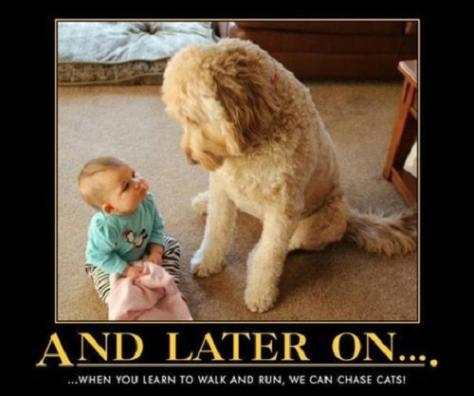 dog-humor-007-jpg