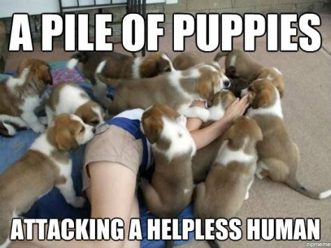 a-pile-of-puppies